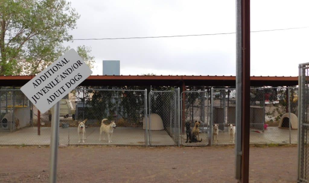 City of Socorro Animal Shelter Additional Dog Pens