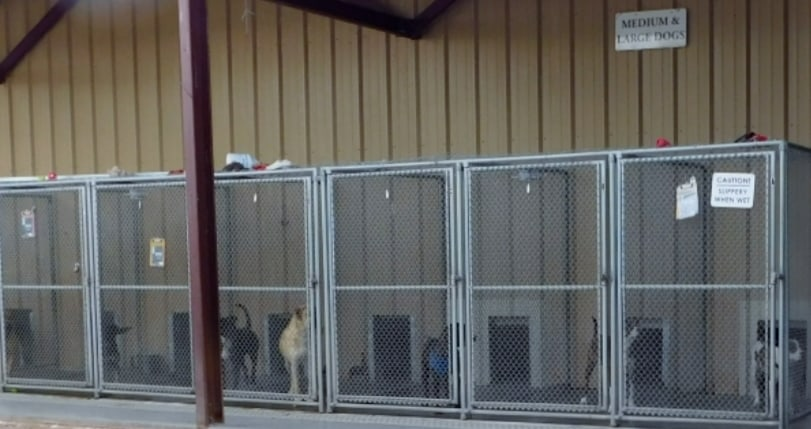 City of Socorro Animal Shelter Pens